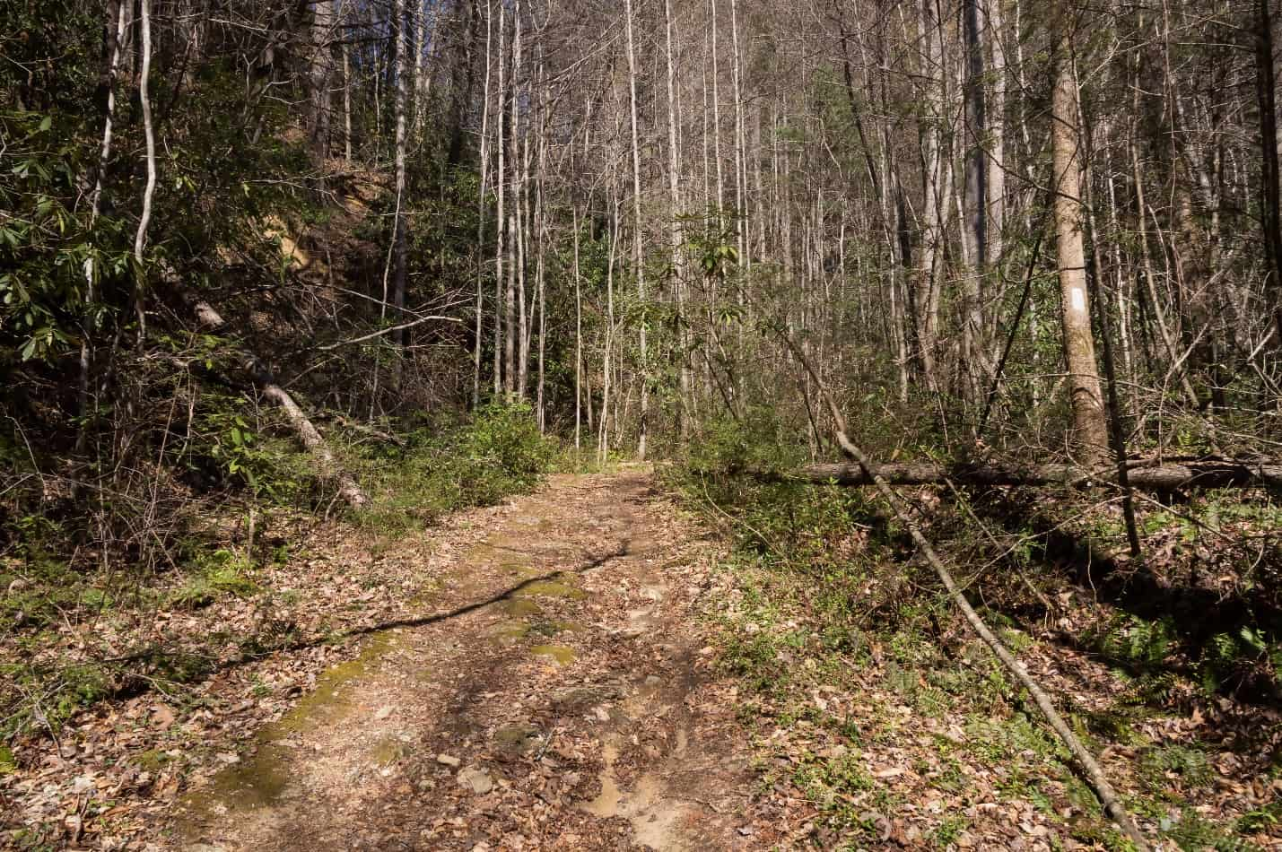 The Foothills Trail