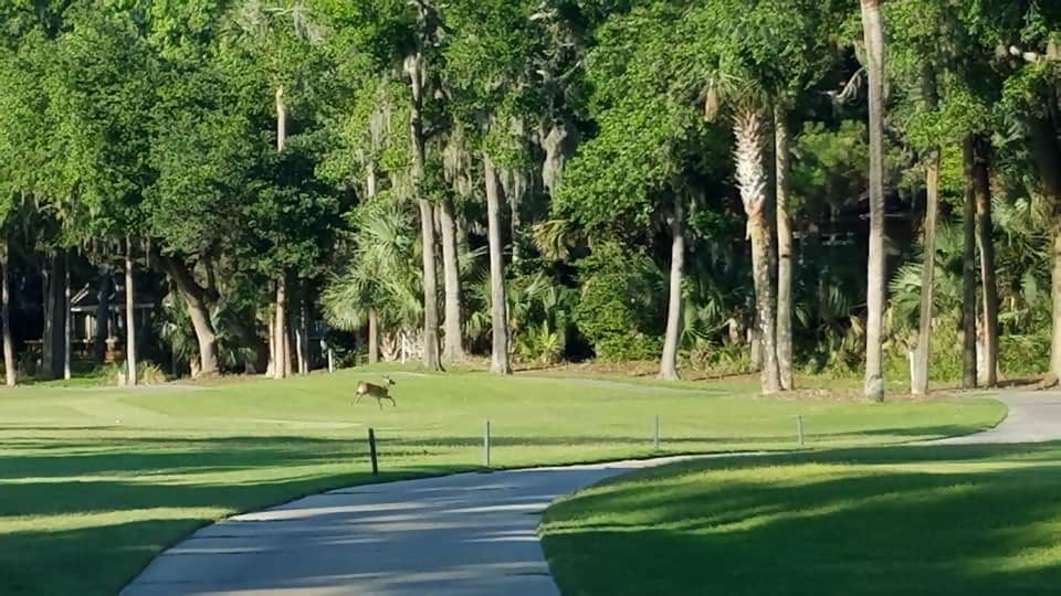 best golf courses in South Carolina